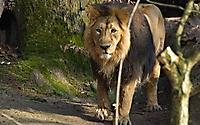 Tiergarten 2014_9